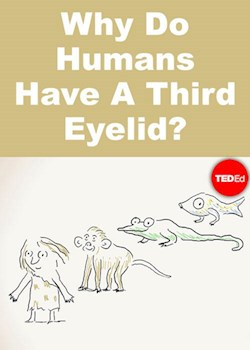 Why Do Humans Have A Third Eyelid?