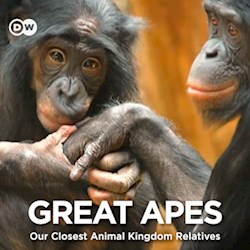 Great Apes - Our Closest Animal Kingdom Relatives (CU)
