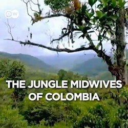 The Jungle Midwives of Colombia (CU)